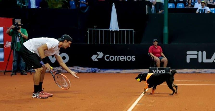[Fotogaleria] Elias encantou em São Paulo com a ajuda de… uma matilha de cães